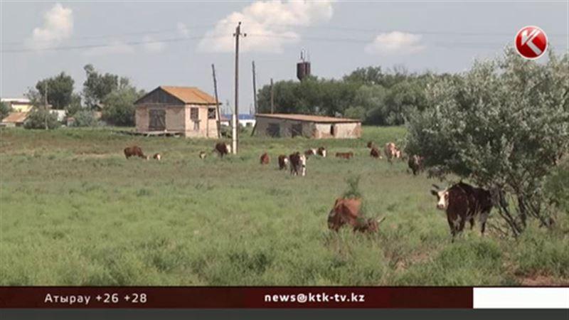 Ветеринары ищут вакцину, которая спасет казахстанский скот