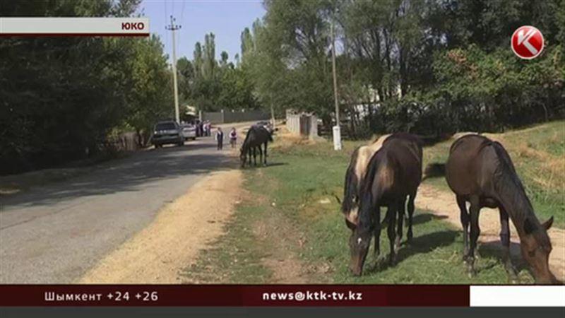 У южноказахстанских крестьян десятками пропадают лошади