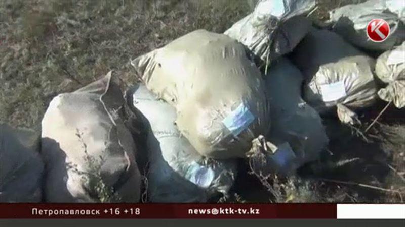 Западноказахстанские полицейские обнаружили огромную плантацию конопли