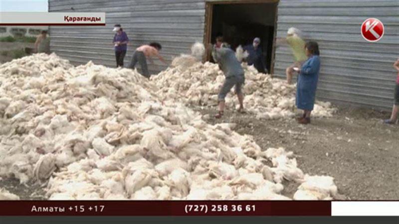 Қарағандыдағы құс фабрикасының бірінде 16 мыңнан аса тауық қырылып қалды