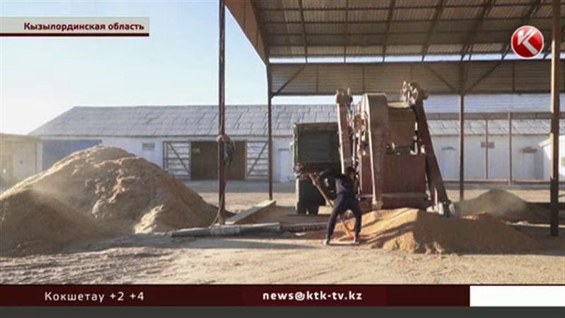 Кызылординские рисоводы не знают, что делать с урожаем