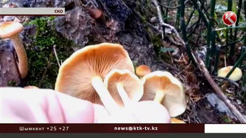 В СКО грибами насмерть отравилась мать и три дочери-школьницы