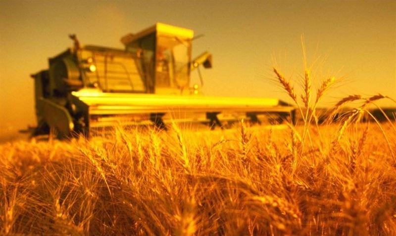 Как убить хороший урожай? Карагандинцы знают…