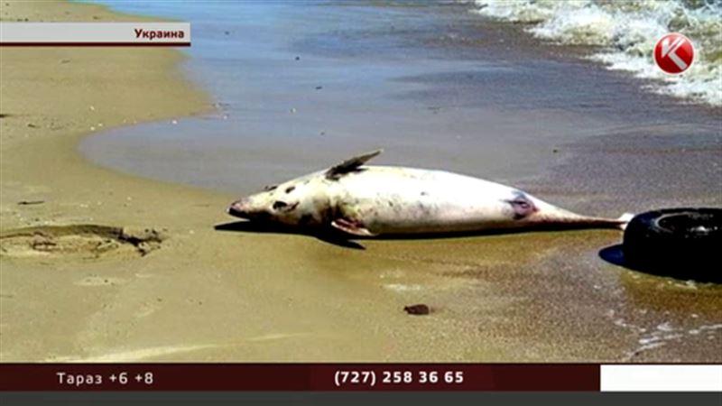 Шторм на Украине выбросил на берег дельфина