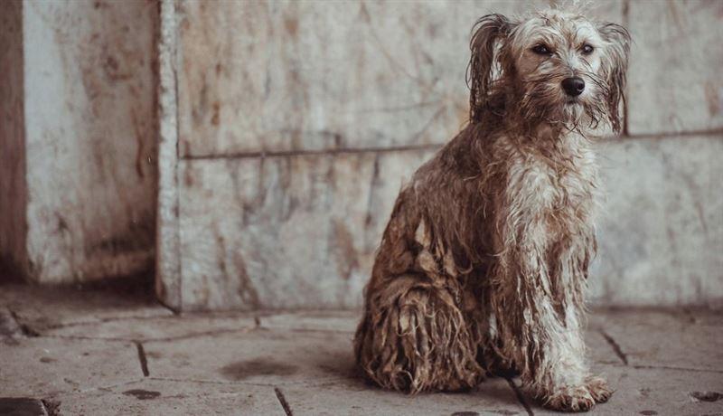 Пять лет и у нас не будет бродячих собак – нужен закон