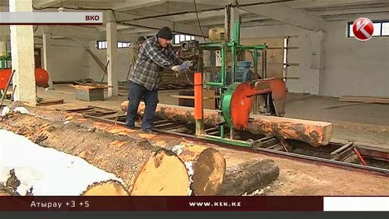 Природа, отдыхай: запрет на санитарную вырубку леса вызвал панику