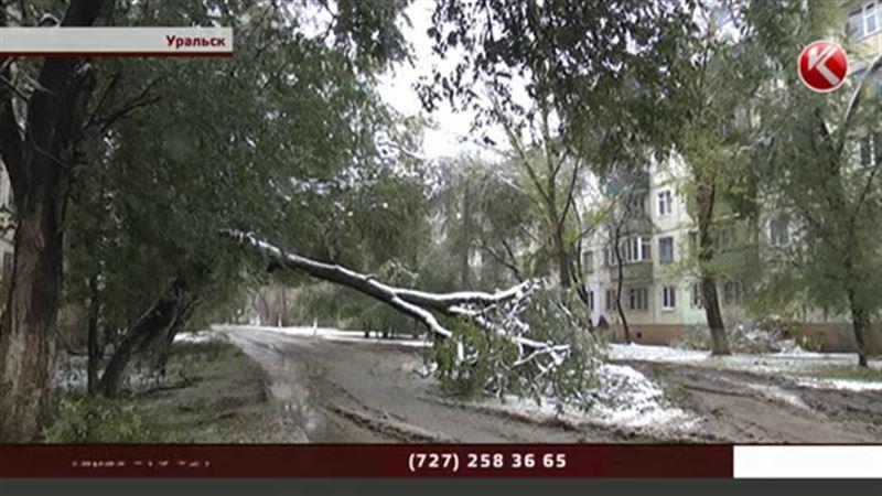 Уральск засыпало сломанными деревьями