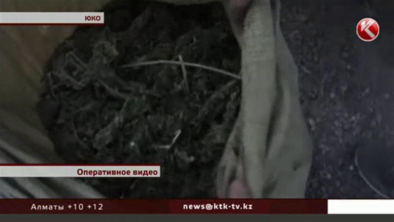 Смелых наркосбытчиков задержали в Южном Казахстане