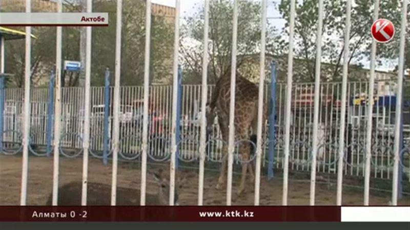 В Актобе выяснили, что мини-зоопарк в центре города 10 лет существует незаконно