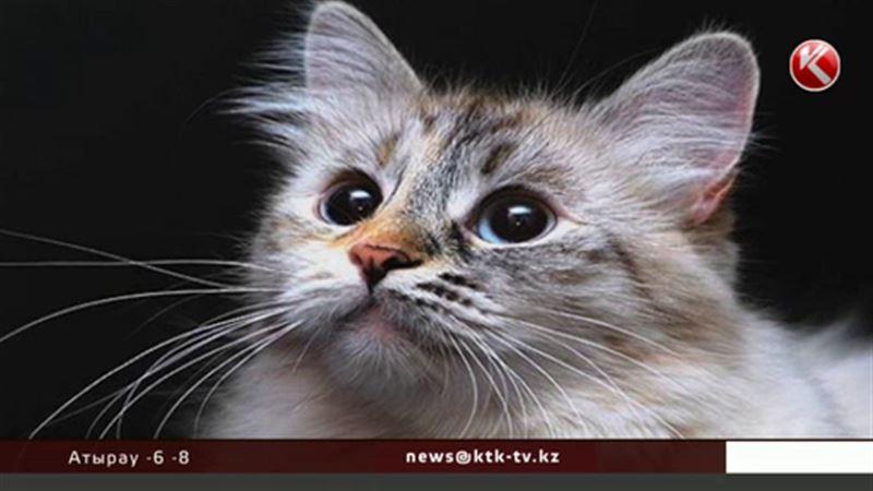 Павлодарские полицейские разыскали и вернули домой кота Ваську