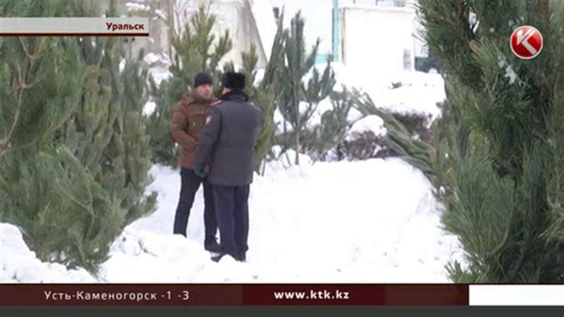«Нелегальные» елки в Уральске конфискуют