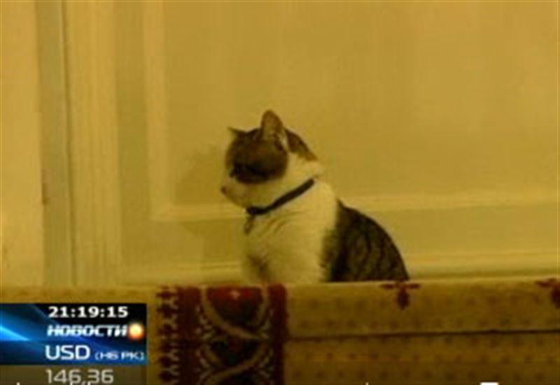 В резиденции британского премьера появился новый сотрудник - кот Ларри