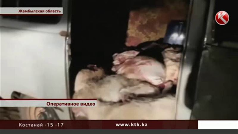 В Жамбылской области разыскивают охотников на сайгу