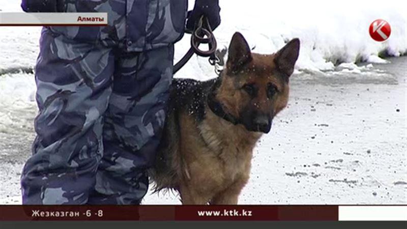 Военные, полицейские и собаки  будут следить за порядком во время Универсиады