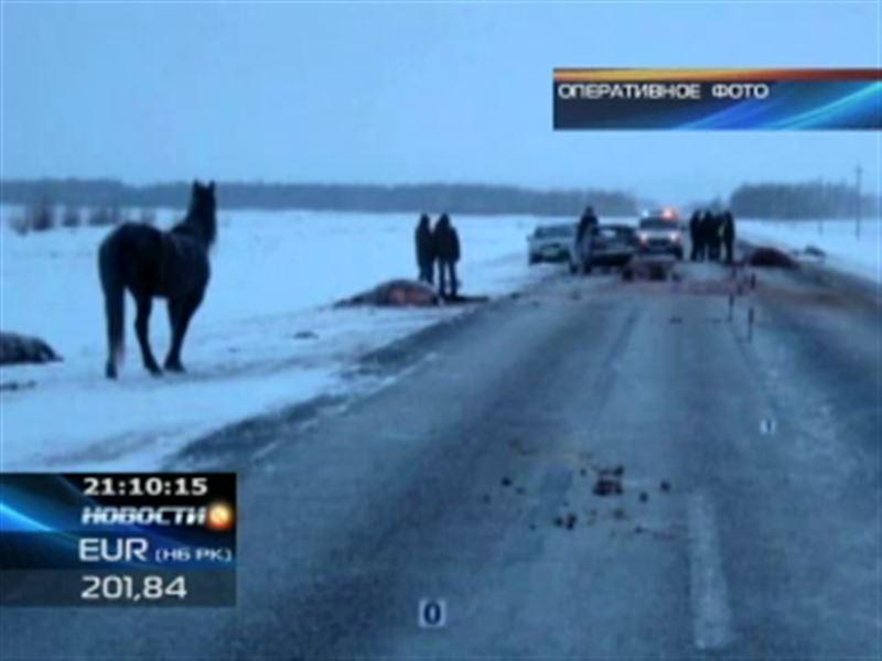 Табун лошадей стал причиной серьёзного ДТП в Северном Казахстане
