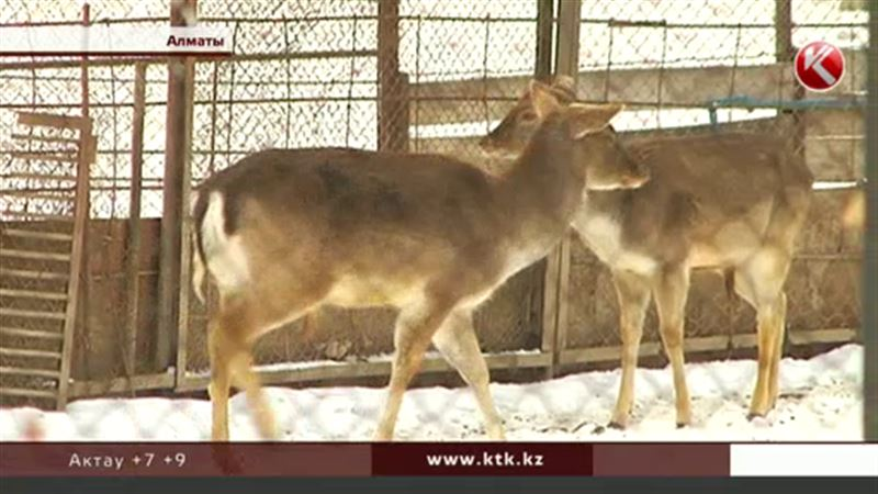 В многострадальном зоопарке Алматы животных начали кормить как положено