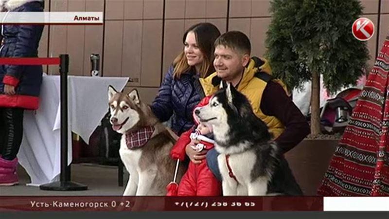 Элитные собаки Алматы спасают безродных псов