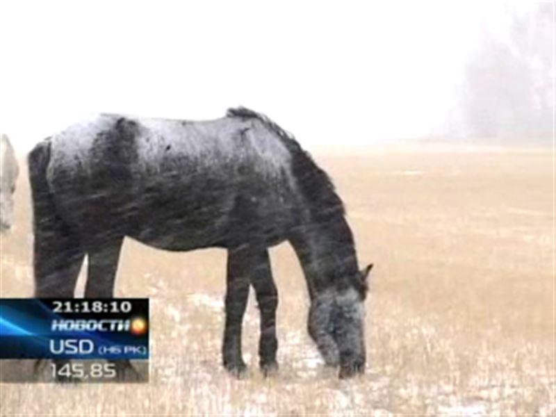 Настоящие страсти разгорелись в Павлодаре вокруг табуна лошадей