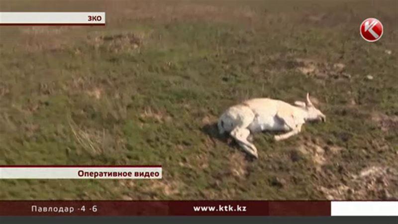 В ЗКО задержали полицейских-браконьеров