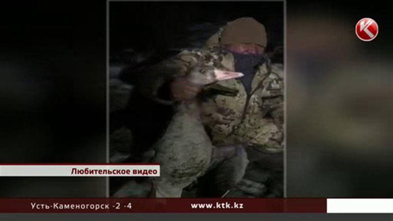 Разыскивают охотников, похвалившихся в интернете убитыми 145 утками