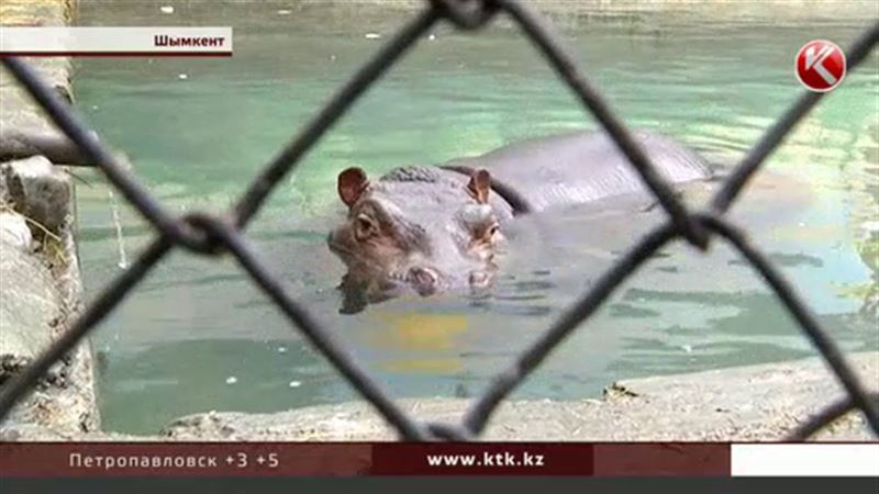 В шымкентском зоопарке умерла Ламбада