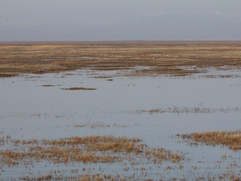Двух пропавших в реке братьев ищут в Карагандинской области