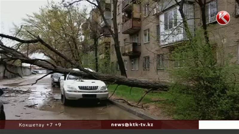 На юге Казахстана ветер с корнями вырывал деревья