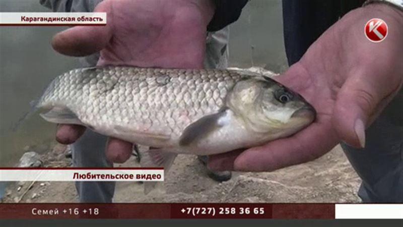 После паводка рыбу в пригороде Караганды ловят руками