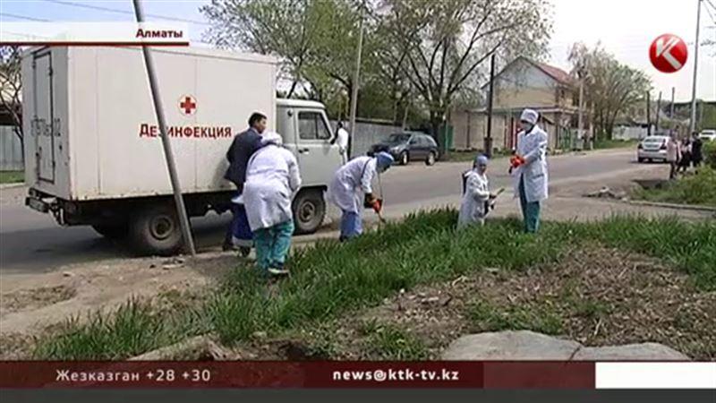 Крысы в Алматы «поумнели» и перестали есть ядовитые приманки