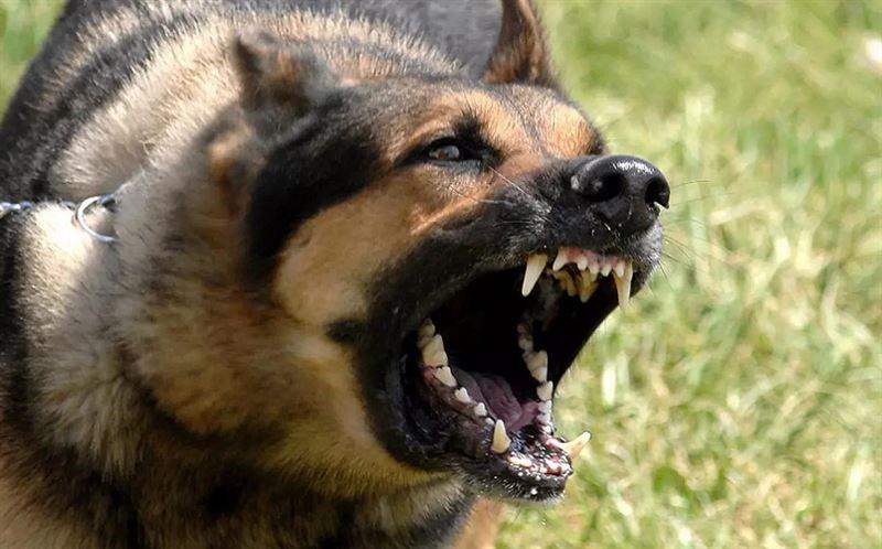 В ЗКО собака загрызла 20 овец и покусала мужчину