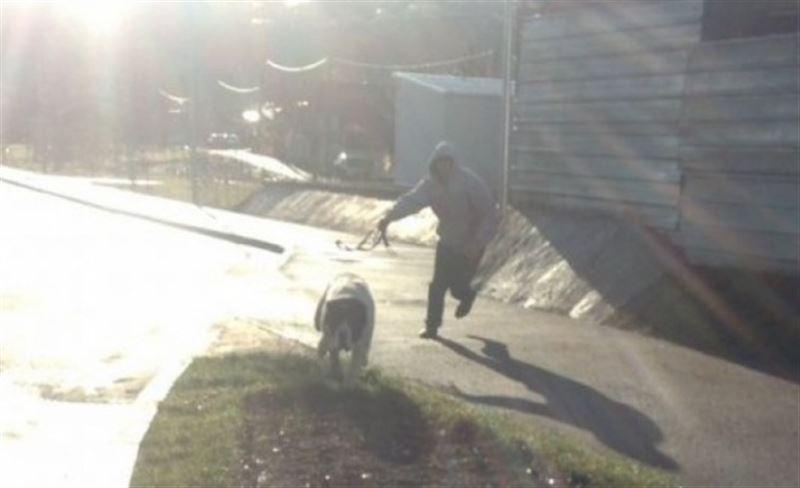 Хозяина напавшей на мужчину овчарки разыскивают в Алматы