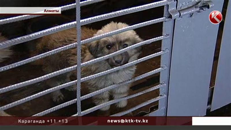 Для отловленных алматинских собак обещают построить питомник международного уровня
