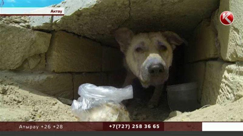 В Актау спасли заживо погребенную Котю