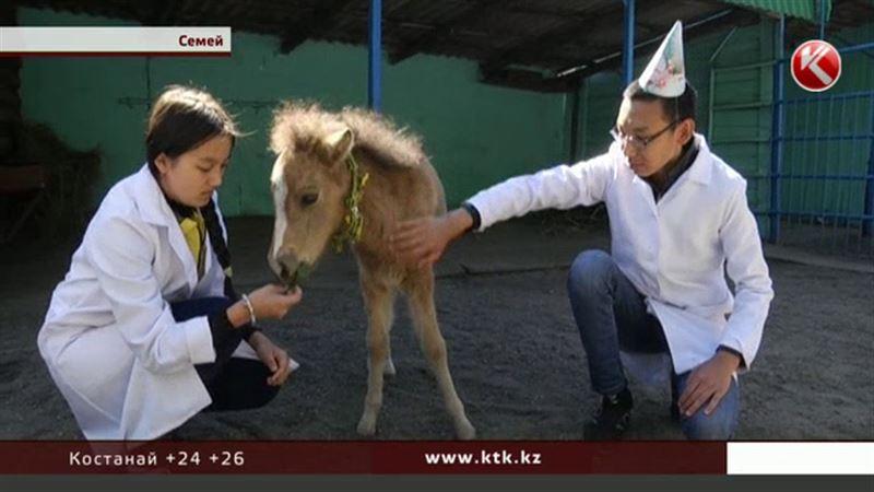 В Семее с размахом отметили день рождения пони