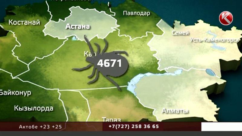 Тысячи казахстанцев уже пострадали от укусов клещей