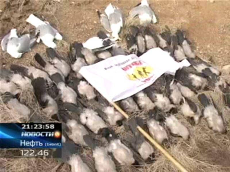 В Актобе открыли сезон охоты на ворон