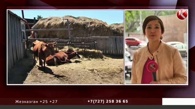 Болезнь, которая косит скот в Карагандинской области, еще не установлена