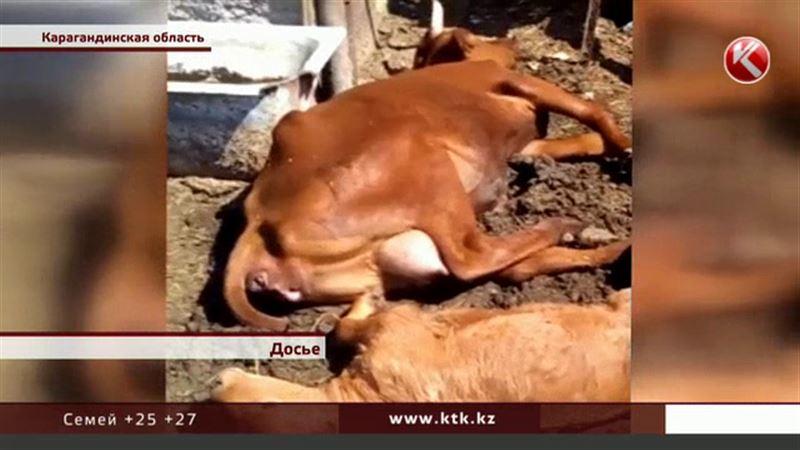 Назвали причину падежа домашнего скота в Карагандинской области