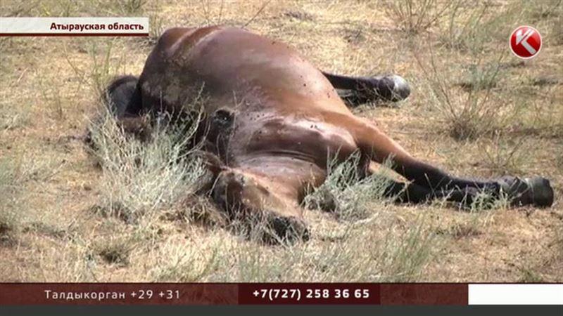 В Атырауской области в мучениях массово умирают лошади