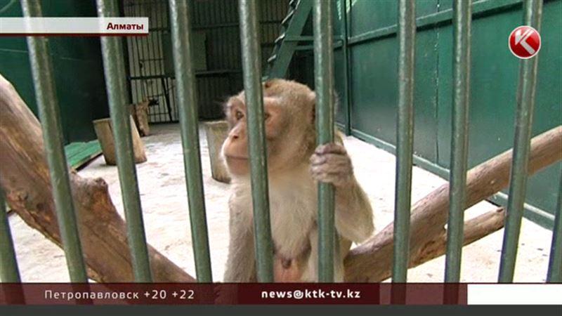 Посетители Алматинского зоопарка не смогут вплотную приближаться к зверям
