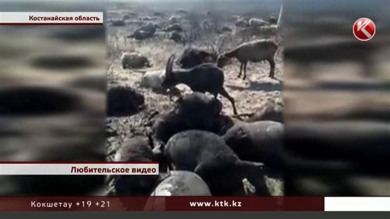 В костанайской степи из-за молнии погибли чабан и полторы тысячи овец