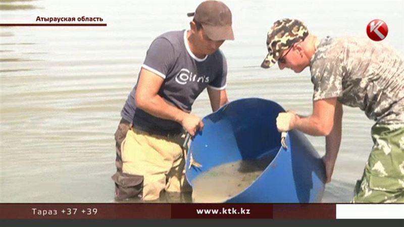 Атырауские волонтеры отправились на спасение мальков