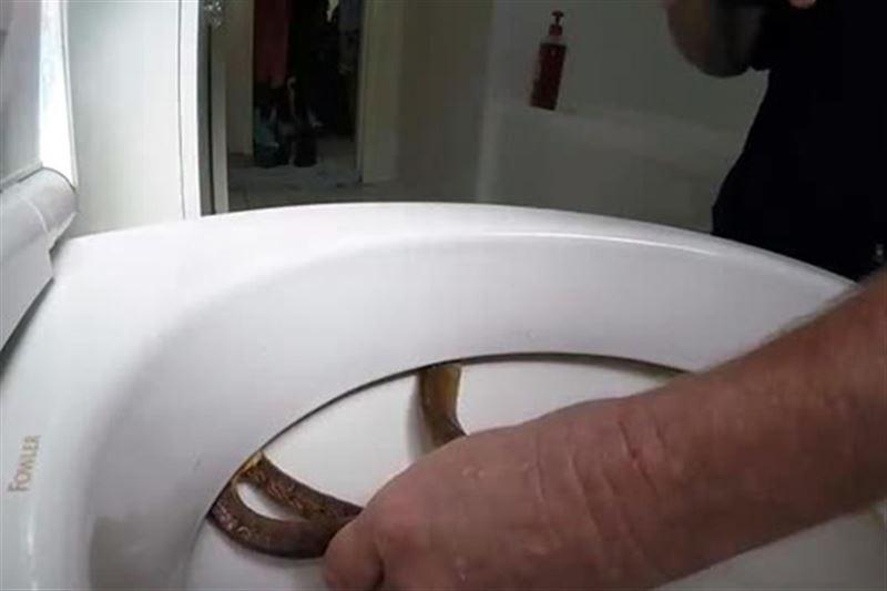 Семья нашла ядовитую змею у себя в унитазе