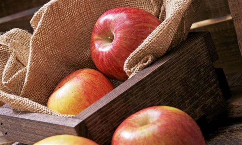 Пять лучших яблочных рецептов