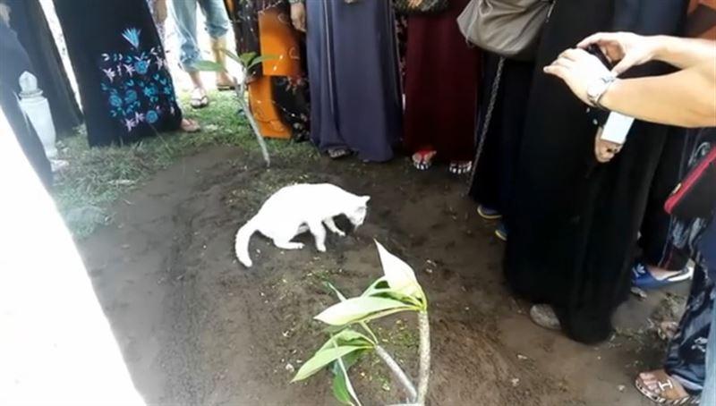 Кот на похоронах хозяина попытался раскопать его могилу