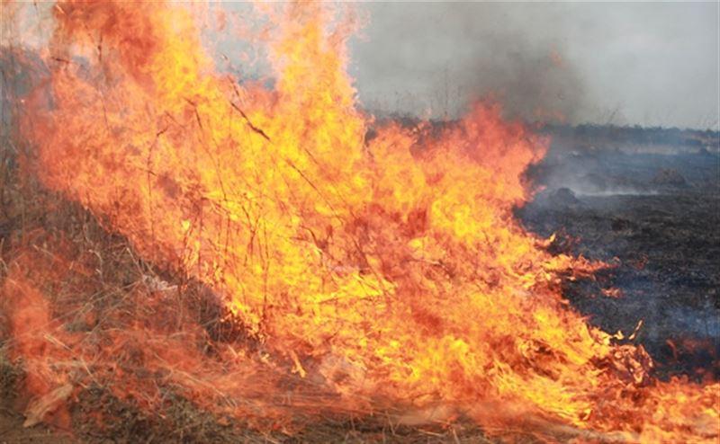 Тушение лесного пожара в Акмолинской области продолжается