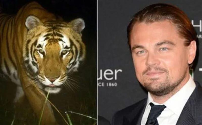 Голливудский актер Leonardo DiCaprio высказался о возвращении туранского тигра в Казахстан