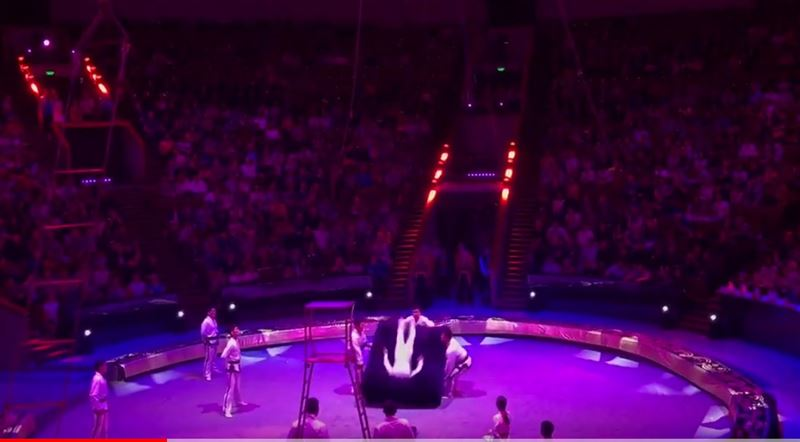 В московском цирке скончался артист после неудачного трюка