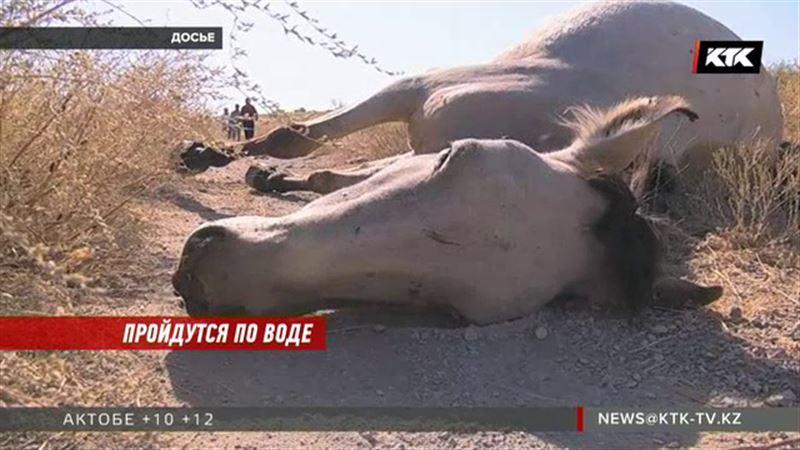 Массовый падеж скота заинтересовал жамбылских прокуроров