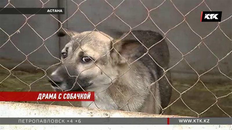 Ученые Астаны просят у ветстанции трупы собак, зоозащитники требуют объяснений